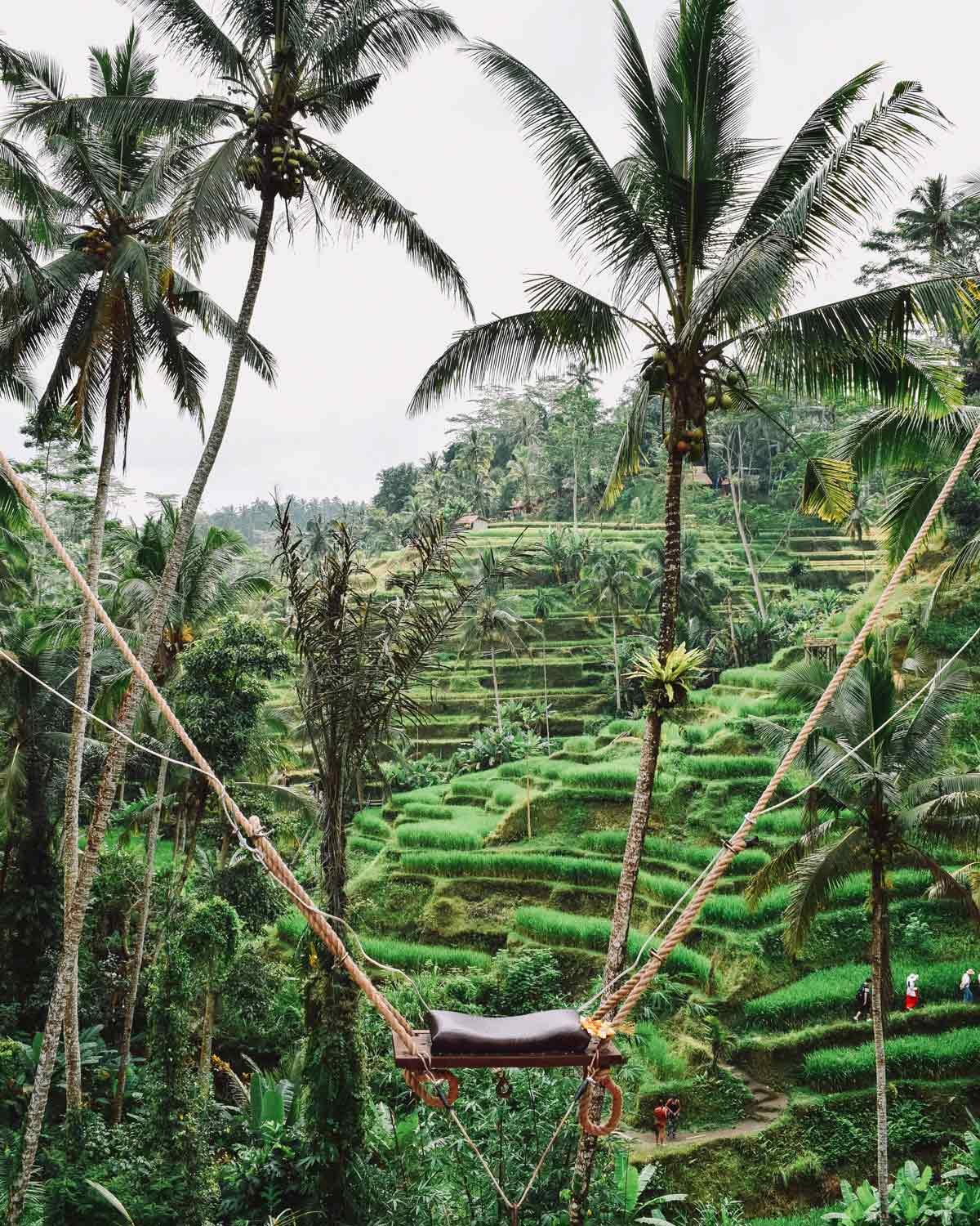 Ubud's famous rice terraces. Photo: Dave Weatherall via Unsplash.