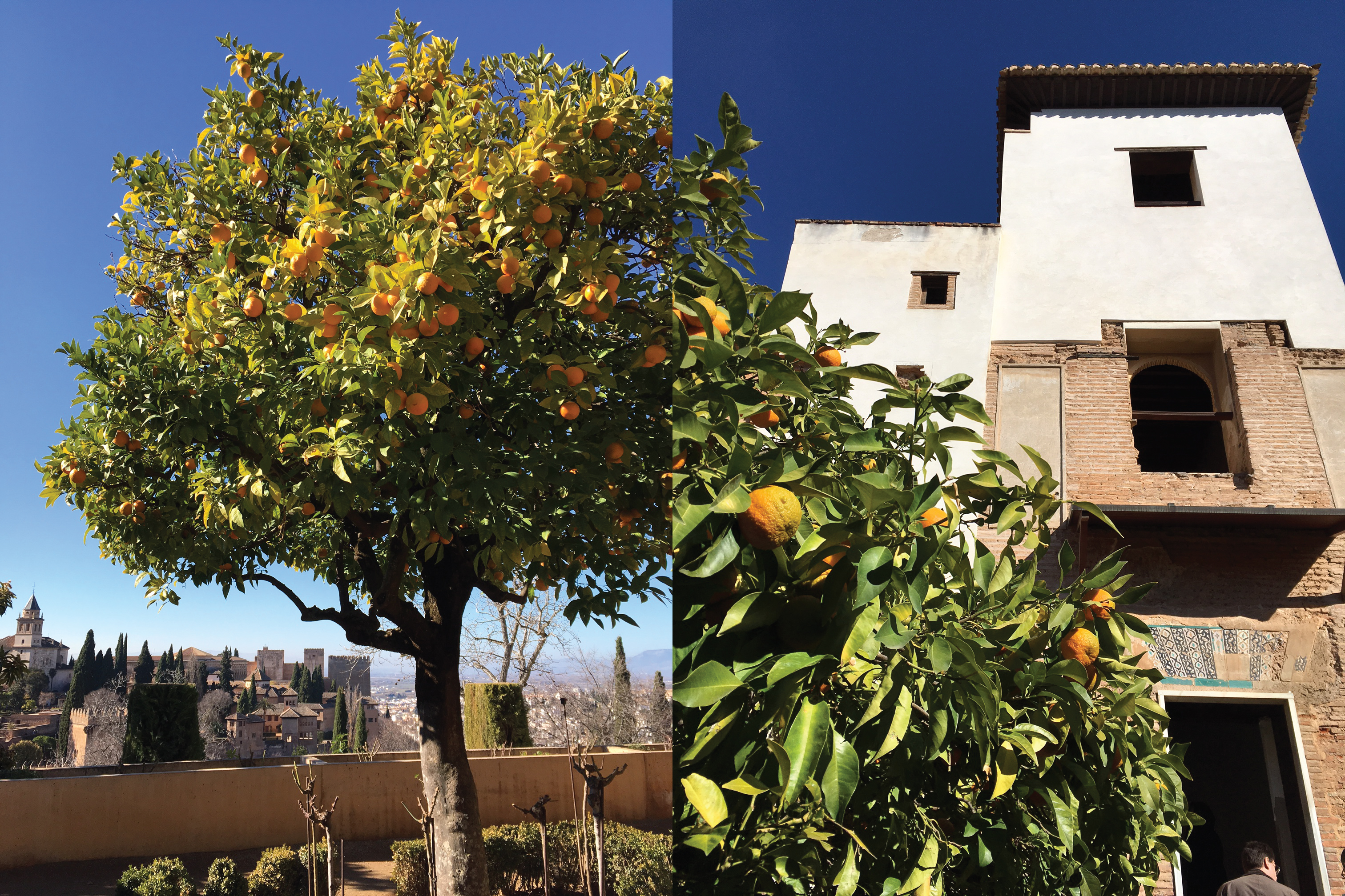 My favorite: these lovely orange trees. A symbol of Granada.