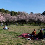 EARLY SPRING IN MADRID'S QUINTA DE LOS MOLINOS