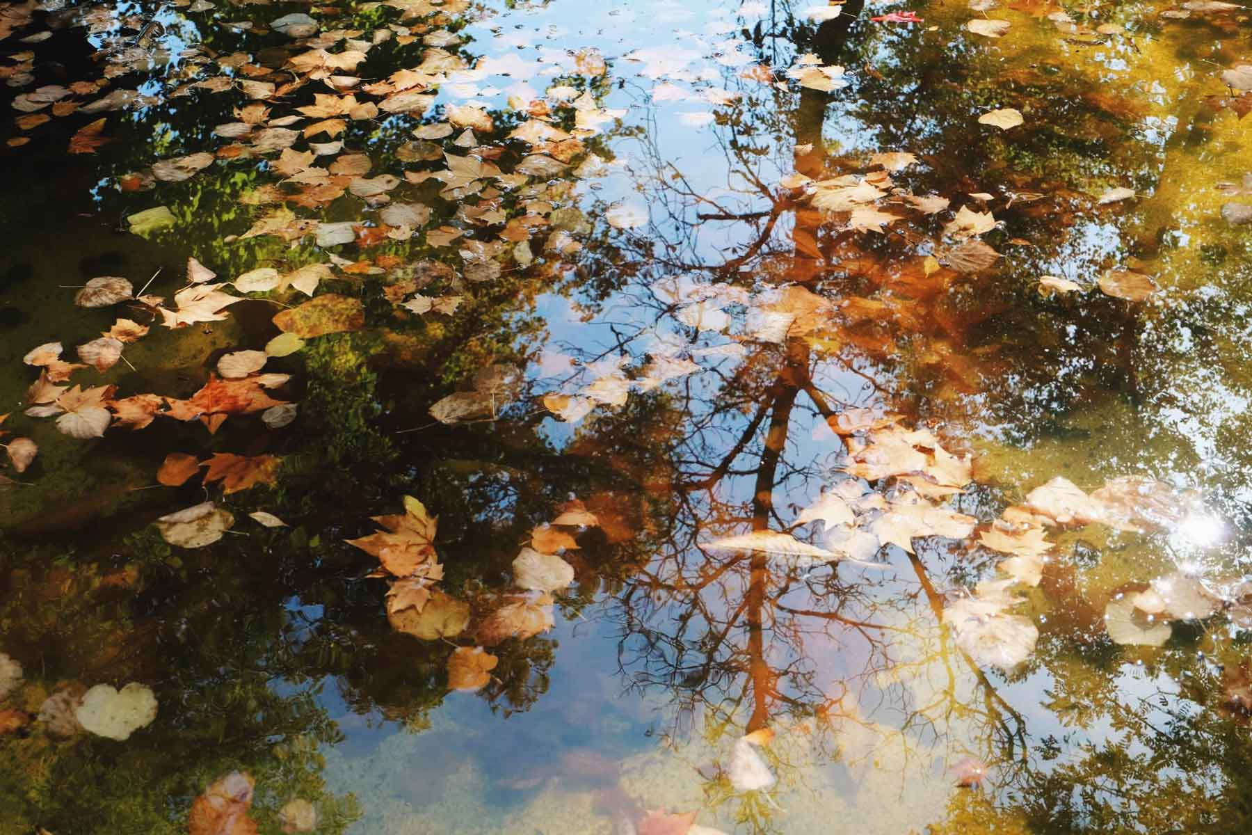 El otoño empieza a asomar.